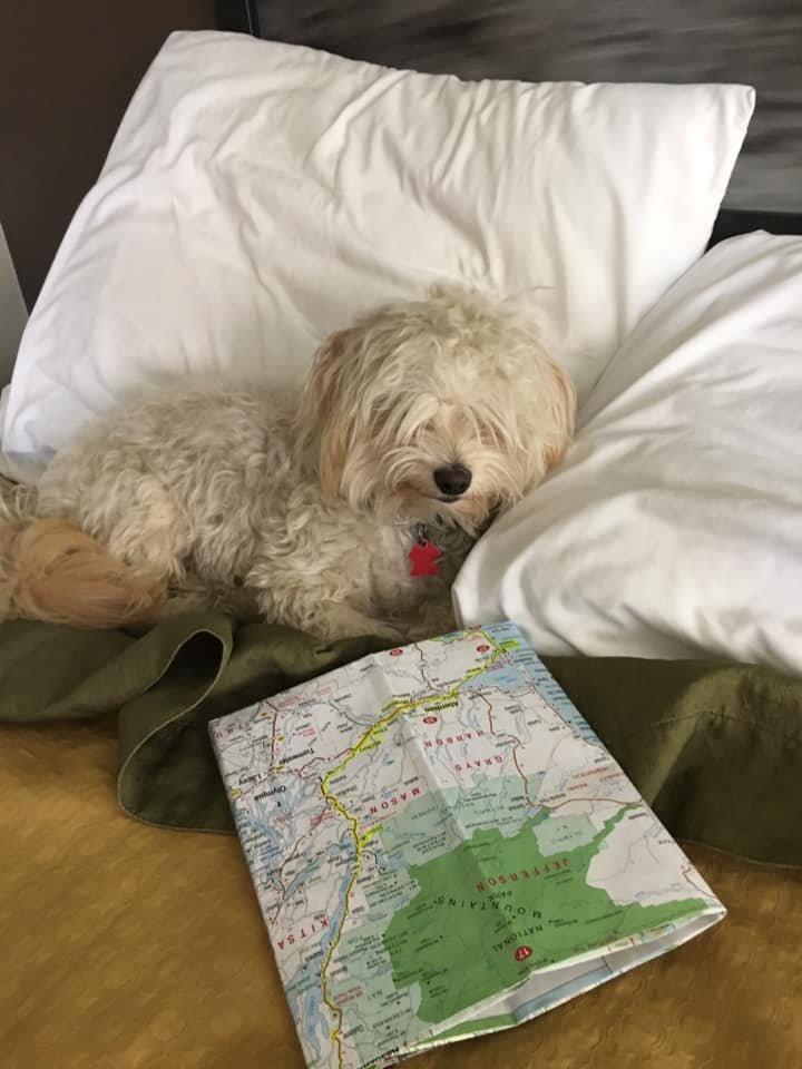 Yogi the Adventure Dog