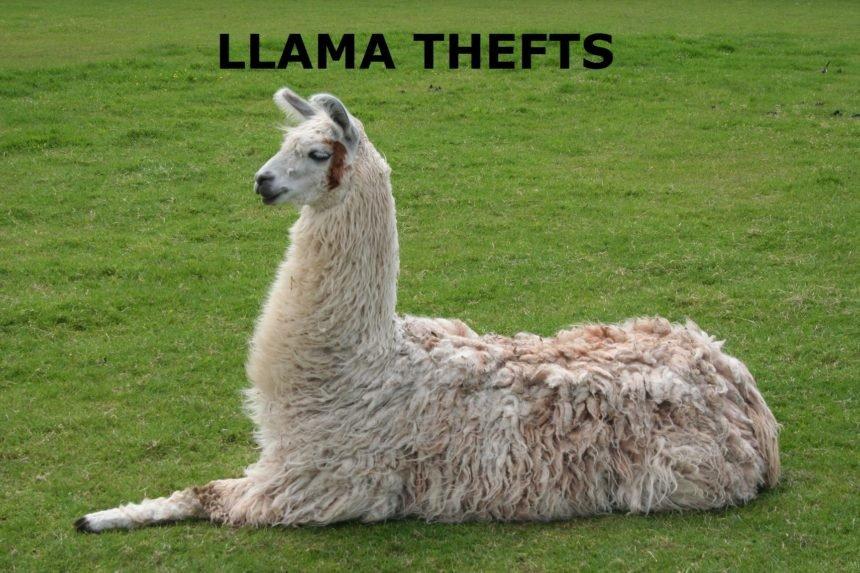 LLAMA THEFTS
