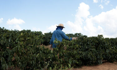 Coffee prices haven't been this high in 4 years. A worker here inspects coffee trees on a farm in Guaxupe